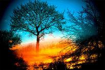 Sonne, Baum, Zweig, Früh