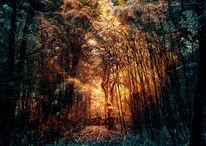 Holz, Eichen, Sonne, Baum