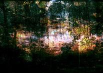 Licht, Amper, Ufer, Zweig