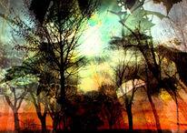 Wolken, Baum, Äste, Licht