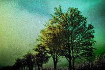 Autofahren, Baum, Luft, Zweig