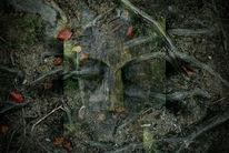 Schatten, Wald, Wurzel, Gesicht