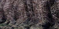 Acker, Stängel, Wind, Pflanzen