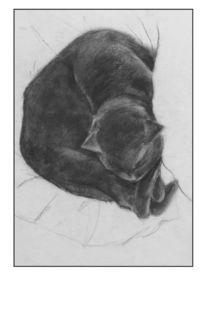 Katze, Kohlezeichnung, Tiere, Zeichung