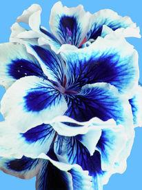 Natur, Pflanzen, Blumen, Blüte