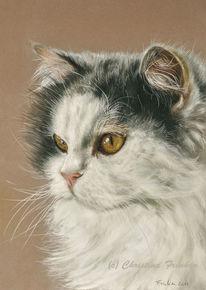 Pastellmalerei, Katzenportrait, Natur, Katze