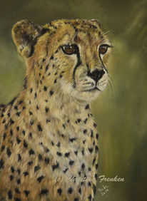 Tierwelt, Großkatze, Zoo, Zeichnung
