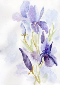 Blumen, Sommer, Iris, Blau