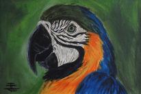Papagei, Malerei, Figural