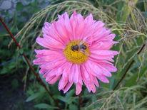 Makro, Blumen, Tiere, Bunt