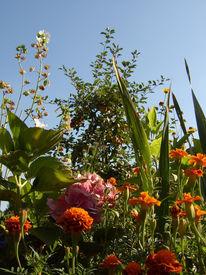 Bunt, Garten, Pflanzen, Farben