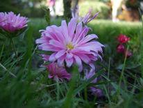 Makro, Blumen, Violett, Hübsch