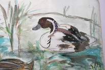 Ente, Wasser, Frühling, Aquarellmalerei