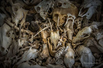Vanitas, Knochen, Tiere, Schädel