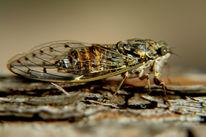 Wald, Heuschrecke, Insekten, Kroatien