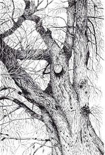 Baum, Schwalm, Zeichnung, Schwalmstadt