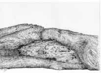 Federzeichnung, Vogel, Holz, Tusche