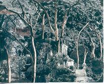 Park, Wald, Baum, Haus