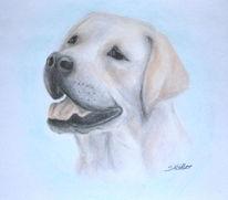 Hund, Labrador, Tiere, Zeichnungen
