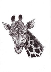 Zeichnungen, Giraffe