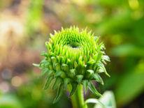 Blumen, Grün, Blüte, Fotografie