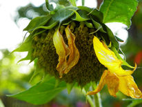 Tod, Blumen, Fotografie, Herbst