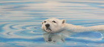 Portrait, Eis, Eisbär, Tiere