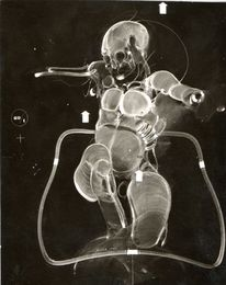 Homme, 1975, Transparenz, Malerei
