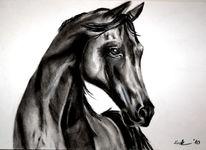 Kohlezeichnung, Schwarz weiß, Vollblut, Tierportrait