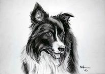 Kohlezeichnung, Tierportrait, Grenze, Hund