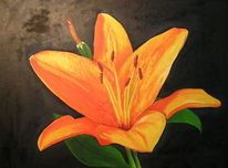 Lilie, Pflanzen, Ölmalerei, Malerei