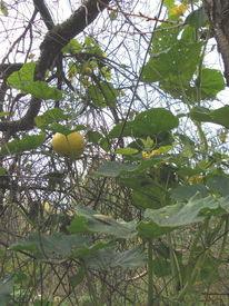 Sonne, Herbst20143, Leben, Kürbiss