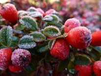 Herbst, Frost