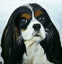 Hundekopf, Spaniel, Portrait, Hundeportrait