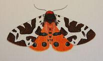 Schmetterling, Brauner bär, Aquarell, Bär