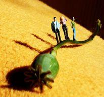 Mohn, Miniaturfiguren, Fotografie
