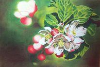 Obstblüte, Knospe, Blüte, Blätter