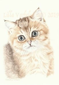 Tusche, Babykatze, Katze, Katerchen
