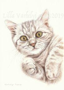 Animaldraw, Tierportrait, Katze, Babykatze
