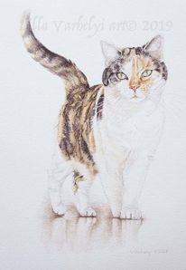 Tierzeichnung, Tierportrait, Spiegelung, Katze