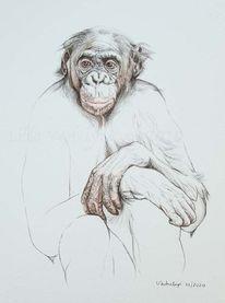 Tierportrait, Primaten, Tuschmalerei, Affe