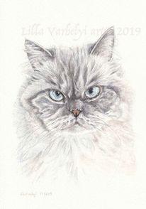 Tierzeichnung, Tuschmalerei, Katze, Zeichung