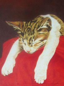 Schlaf, Kissen, Katze, Rot