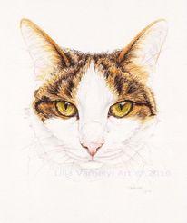 Katze, Tier, Tiermalerei, Tusche