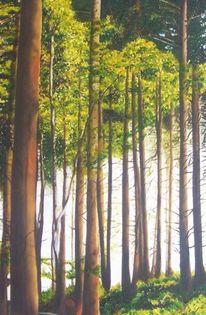 Baumstamm, Naturwald, Wald, Licht