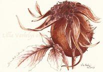 Hagebutte, Pflanzen, Federzeichnung, Studie