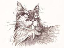 Tusche, Katze, Zeichnen, Illustration