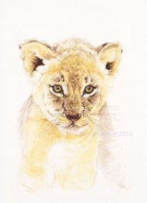 Tusche, Wildtier federzeichnung, Raubtier löwe, Zeichnungen