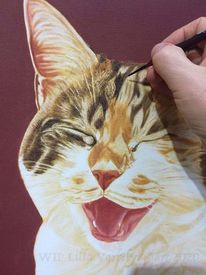 Katze, Realismus, Lachen, Tierportrait