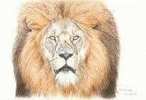 Tierwelt, Löwe, Tierportrait, Tuschmalerei